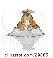 Clipart Illustration Of A Big Toothed Brown Groundhog Woodchuck Land Beaver Or Whistlepig Marmota Monax Emerging From His Burrow His Shadow On The Ground
