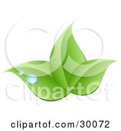 Clipart Illustration Of A Stock Logo Of Three Green Leaves And Blue Drops Of Dew Above A Space For A Company Name And Information by KJ Pargeter #COLLC30072-0055