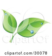 Clipart Illustration Of Two Green Leaves With Blue Dew Drops by KJ Pargeter #COLLC30078-0055