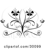 Two Flowers On Top Of An Elegant Black Flourish On A White Background