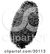 Clipart Illustration Of A Human Fingerprint In Ink by KJ Pargeter