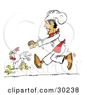 Clipart Illustration Of A Hispanic Male Chef Chasing A White Chicken Bird Around A Kitchen by Spanky Art