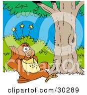 Clipart Illustration Of A Clumsy Owl Seeing Stars After Falling Out Of Or Flying Into A Tree Due To Poor Eye Sight