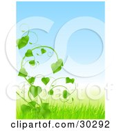 Clipart Illustration Of A Lush Green Vine With Heart Shaped Leaves Growing In A Field Of Grass by elaineitalia