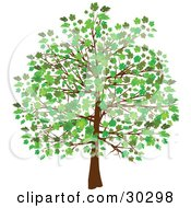 Clipart Illustration Of A Grown Tree With Green Leaves And Foliage