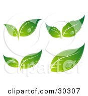 Set Of Four Different Sprouting Green Leaves With Drops Of Dew License The Vector For Optimal Results