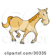 Happy Yellow Horse Trotting On A Farm