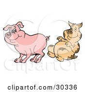 Clipart Illustration Of A Dirty Pig Laughing At A Clean Piggy by LaffToon