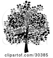 Clipart Illustration Of A Silhouetted Tree In Black With Leaves Covering The Branches