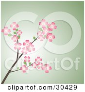 Clipart Illustration Of A Branch Of Pink Dogwood Flowers Over A Green Background