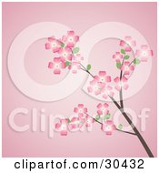 Clipart Illustration Of A Flowering Dogwood Tree Branch With Pink Flowers Over A Pink Background