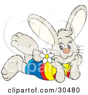 Clipart Illustration Of A Happy Little Bunny Rabbit Wearing Clothes Laying On His Belly And Day Dreaming A White Daisy Flower In Hand by Alex Bannykh