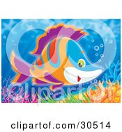 Poster, Art Print Of Friendly Blue White Orange Red And Purple Marine Fish Swimming Over Colorful Corals