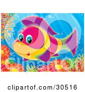 Poster, Art Print Of Cute Pink Yellow Green And Purple Salt Water Fish Swimming Over Sea Anemones And Corals