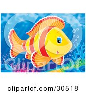 Poster, Art Print Of Cute Red Orange And Yellow Blue Eyed Marine Fish Swimming Over Colorful Corals