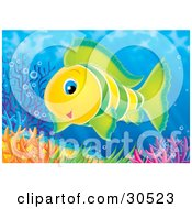Poster, Art Print Of Friendly Green And Yellow Tropical Fish Swimming Near Colorful Corals