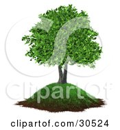 Clipart Illustration Of A Realistic 3D Tree With Lush Green Leaves Growing On A Grassy Hill With Dirt Along The Bottom