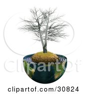 Dead Realistic 3d Tree On A Hill With Dry Grass In The Center Of Planet Earth Cut In Half