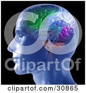 Clipart Illustration Of A 3d Rendered Man In Profile Showing A Colorful Brain