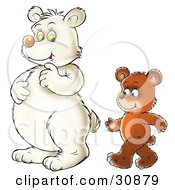 Clipart Illustration Of A Brown Bear Cub Walking Upright Behind A Polar Bear by Alex Bannykh