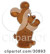 Happy Brown Bear Cub Smiling And Clapping His Paws