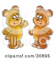 Two Friendly Bear Cubs Smiling And Standing Side By Side