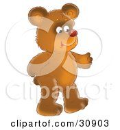 Happy Brown Bear With A Red Nose Walking Upright On His Hind Legs