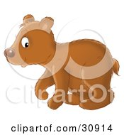 Clipart Illustration Of A Cute Brown Bear Cub In Profile Walking To The Left by Alex Bannykh