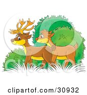 Male And Female Deer Standing In Bushes
