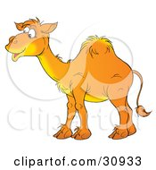 Clipart Illustration Of A Happy Arabian Camel With One Hump Smiling And Standing In Profile