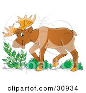 Clipart Illustration Of A Moose Eating Leafy Green Plants by Alex Bannykh