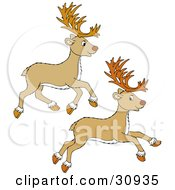 Clipart Illustration Of Two Tan Reindeer Leaping And Running by Alex Bannykh