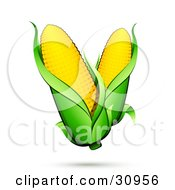 Clipart Illustration Of Two Ears Of Corn With Green Husks And A Shadow