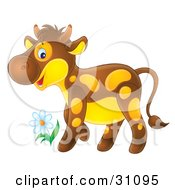 Adorable Brown Calf With Yellow Spots And A Yellow Belly Standing By A Spring Flower