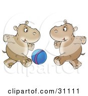 Two Hippos Running And Playing With A Blue Ball