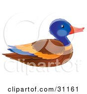 Clipart Illustration Of A Colorful Mallard Duck Drake In Profile by Alex Bannykh