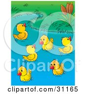 Group Of Happy Yellow Ducklings Playing In A Pond