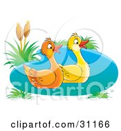 Pair Of Two Happy Ducks Swimming In A Pond