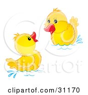 Clipart Illustration Of Two Yellow Ducklings Swimming And Playing