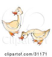 Clipart Illustration Of Two Cream Colored Geese by Alex Bannykh