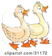Clipart Illustration Of Two Geese Waddling And Talking