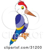 Blue Woodpecker With A Red Head In Profile On A White Background