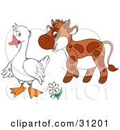 Cute Brown Calf Talking With A White Goose