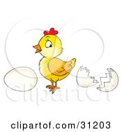 Clipart Illustration Of A Cute Baby Chick Standing Between A Whole Egg And An Egg Shell