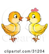 Clipart Illustration Of Two Baby Chicks One Male One Female Facing Each Other And Chatting