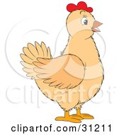 Beige Chicken Hen With Red On Her Head