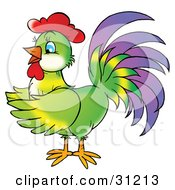 Colorful Green Rooster With Purple Tail Feathers