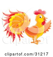 Colorful Orange Red And Yellow Rooster In Profile