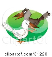 White And Brown Crows Standing Over A Green Circle On A White Background