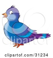 Cute Blue And Purple Pigeon Bird In Profile Facing To The Left On A White Background